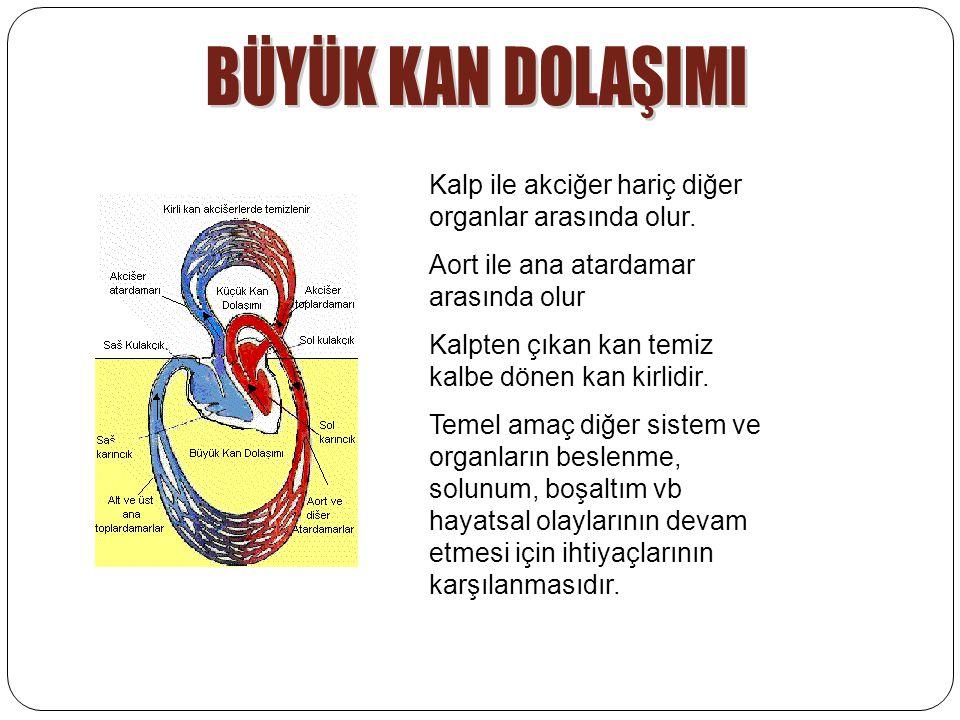Kalp ile akciğer hariç diğer organlar arasında olur.