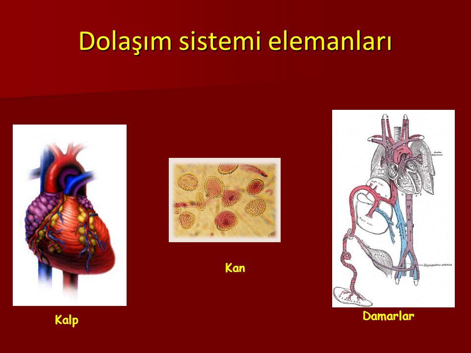 Dolaşım sistemi elemanları Damarlar Kalp Kan