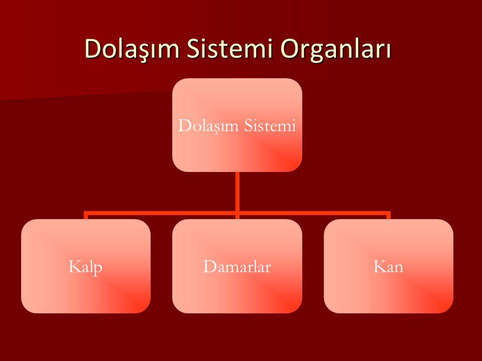 Lenf Sisteminin Görevleri: Lenf Sisteminin Görevleri: Madde alışverişine aracılık eder.