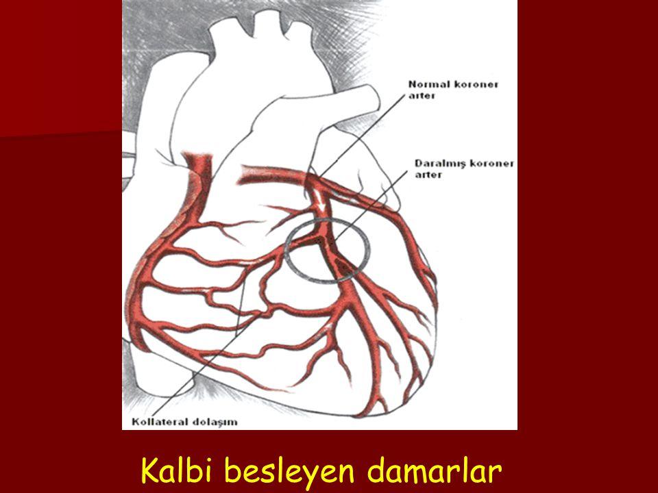 3. KAN DAMARLARININ YAPISI İnsanın dolaşım sisteminde üç çeşit kan damarı ve lenf damarları bulunur. Atar Damarlar (Arter): Kanı kalbin karıncıklarınd