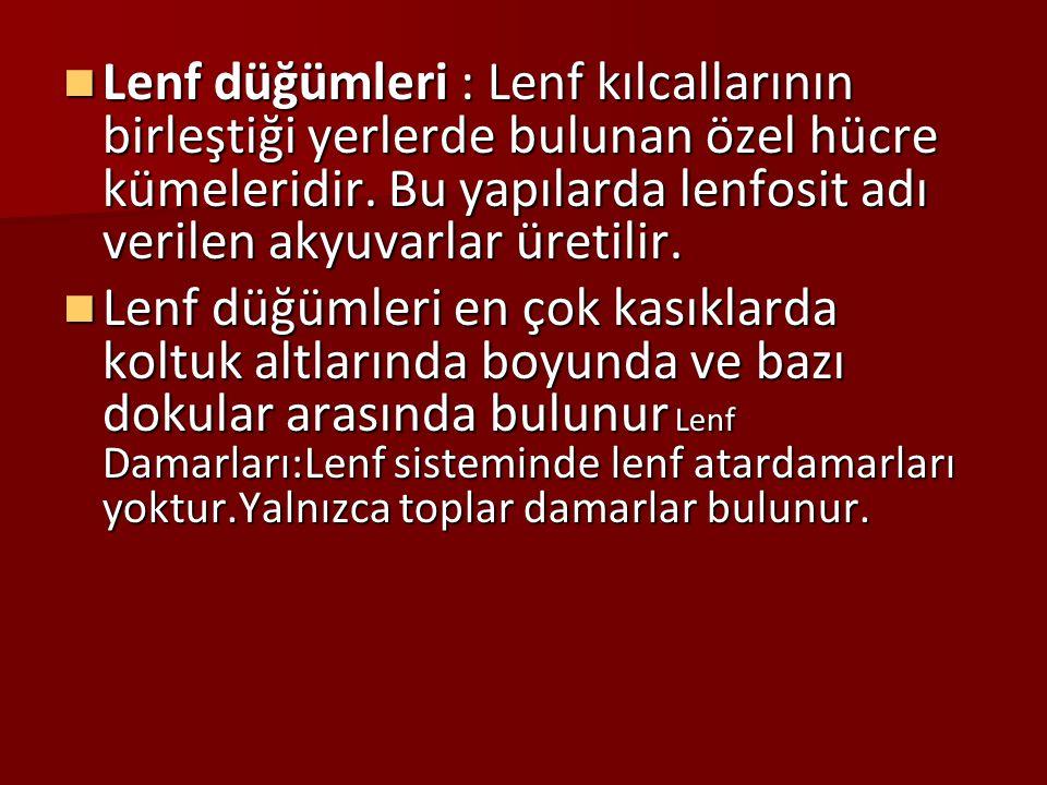 5.LENF SİSTEMİ 5.