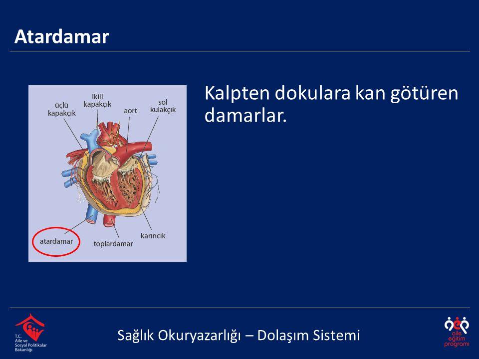 Atardamar Sağlık Okuryazarlığı – Dolaşım Sistemi Kalpten dokulara kan götüren damarlar.