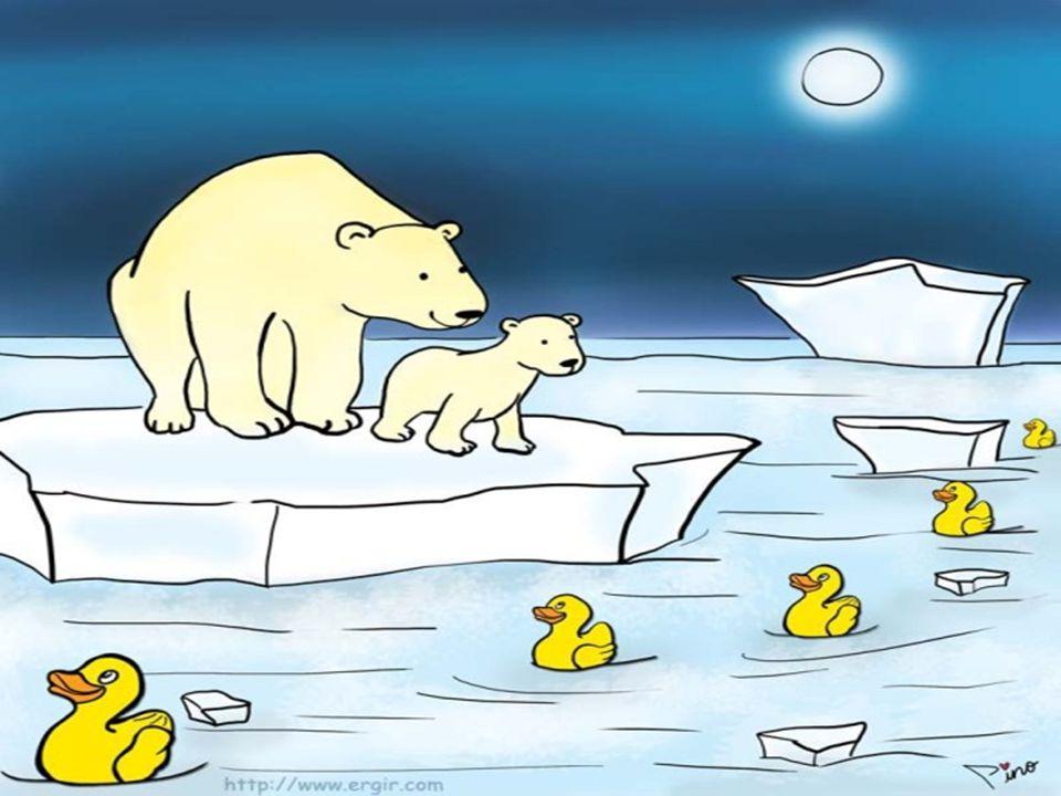 Ördekler 1998'e kadar girdapta Alaska'dan Japonya'ya gidip gelirlerken buradan da firar edip Kuzey Kutbu'na yönlenmişler. Bering Boğazı'nı geçerek büy