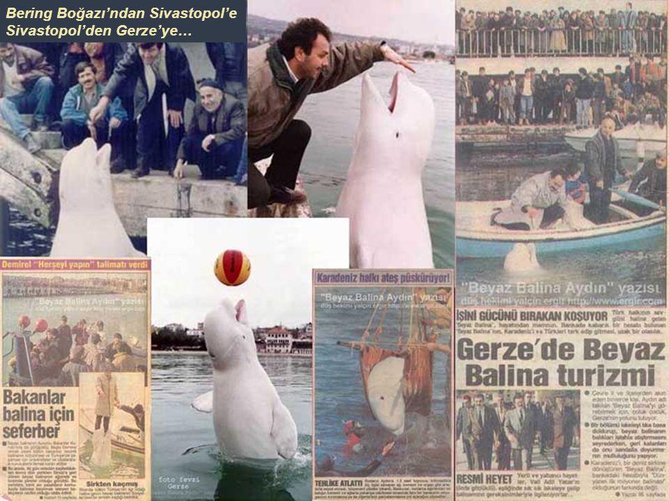Ocak 1992'de firar edip – Bering Boğazı'ndan geçerek Atlantik Okyanusu'na varan ördekler masalken, Bering Boğazı'ndan Karadeniz'in Ukrayna kıyılarına