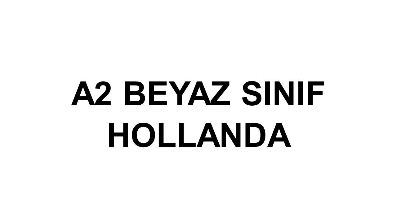 HOLLANDA HAKKINDA BEYİN FIRTINASI YAPTIK