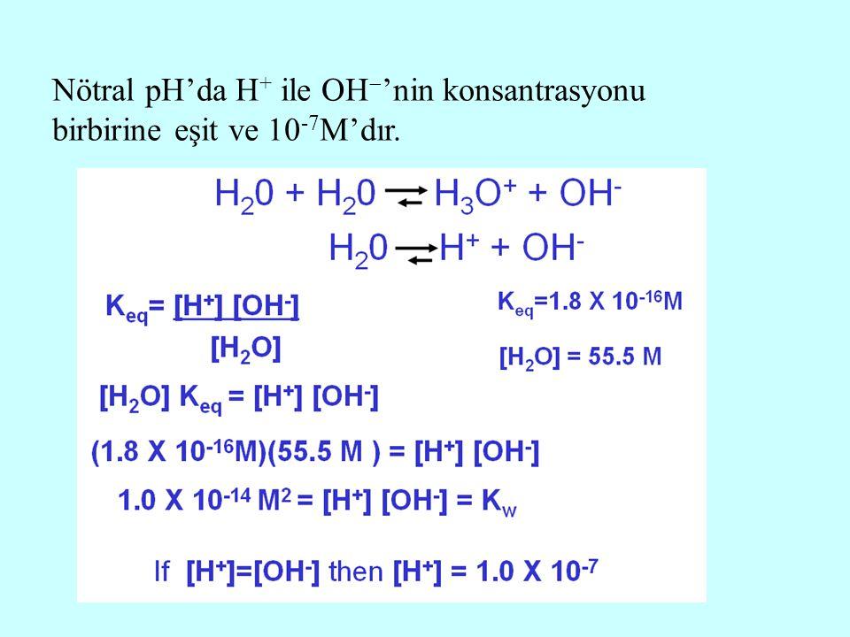 Nötral pH'da H + ile OH  'nin konsantrasyonu birbirine eşit ve 10 -7 M'dır.