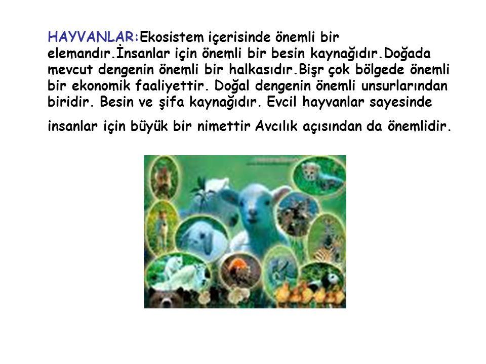 HAYVANLAR:Ekosistem içerisinde önemli bir elemandır.İnsanlar için önemli bir besin kaynağıdır.Doğada mevcut dengenin önemli bir halkasıdır.Bişr çok bö
