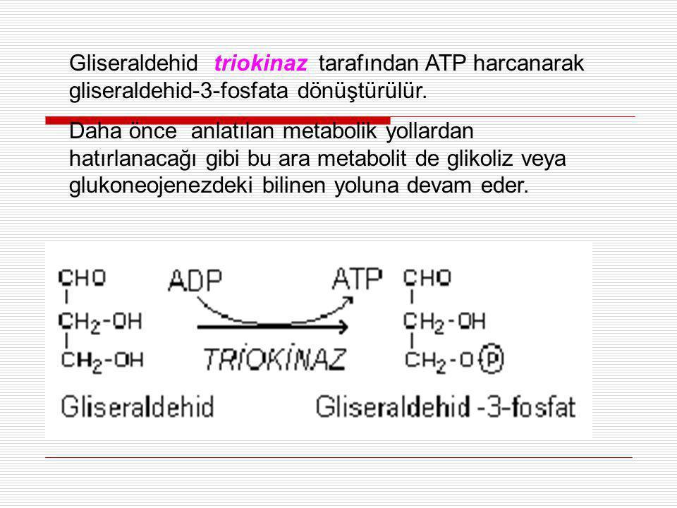 Gliseraldehid triokinaz tarafından ATP harcanarak gliseraldehid-3-fosfata dönüştürülür. Daha önce anlatılan metabolik yollardan hatırlanacağı gibi bu