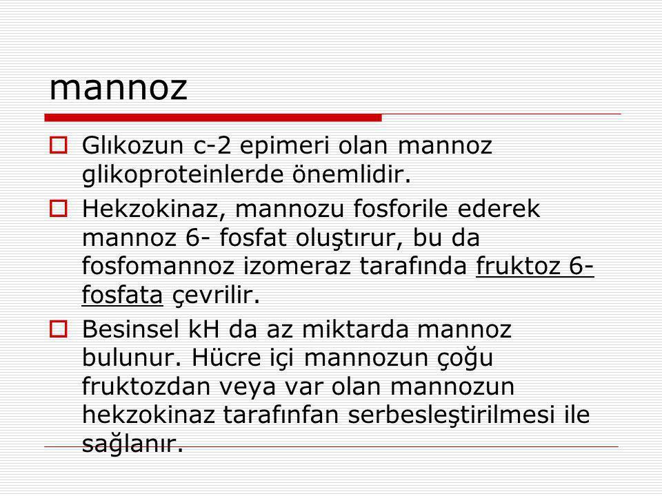 mannoz  Glıkozun c-2 epimeri olan mannoz glikoproteinlerde önemlidir.  Hekzokinaz, mannozu fosforile ederek mannoz 6- fosfat oluştırur, bu da fosfom
