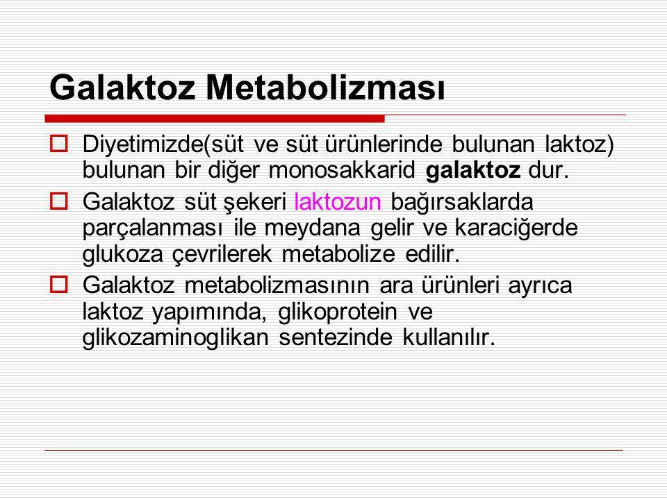 Galaktoz Metabolizması  Diyetimizde(süt ve süt ürünlerinde bulunan laktoz) bulunan bir diğer monosakkarid galaktoz dur.  Galaktoz süt şekeri laktozu