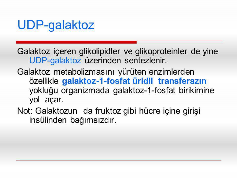 UDP-galaktoz Galaktoz içeren glikolipidler ve glikoproteinler de yine UDP-galaktoz üzerinden sentezlenir. Galaktoz metabolizmasını yürüten enzimlerden