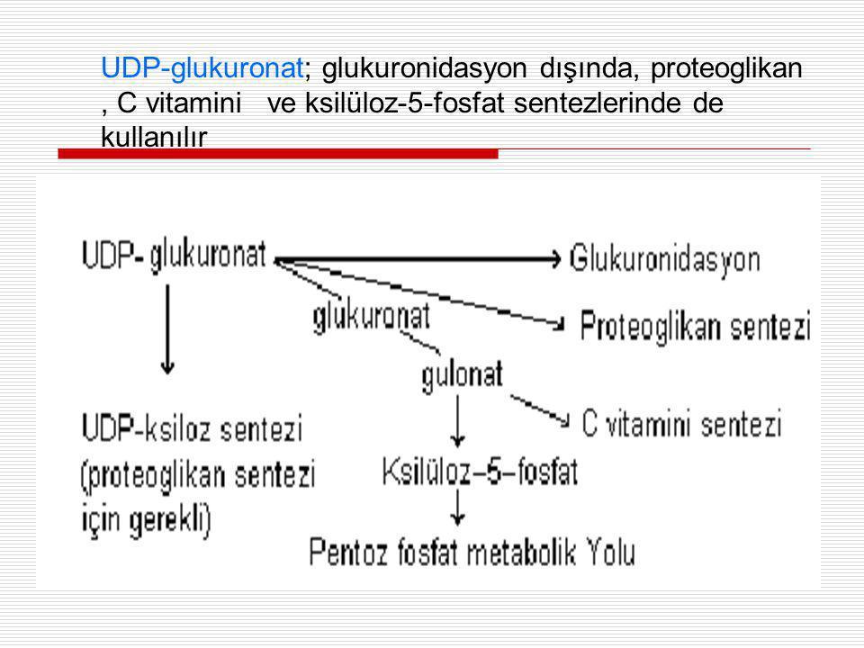 UDP-glukuronat; glukuronidasyon dışında, proteoglikan, C vitamini ve ksilüloz-5-fosfat sentezlerinde de kullanılır