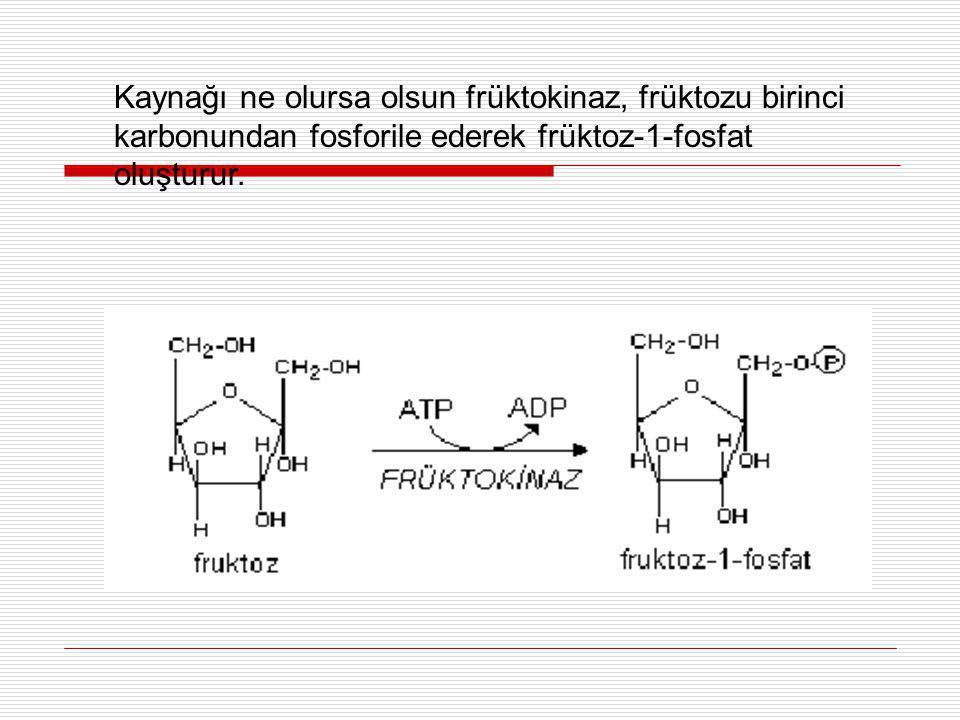 Kaynağı ne olursa olsun früktokinaz, früktozu birinci karbonundan fosforile ederek früktoz-1-fosfat oluşturur.