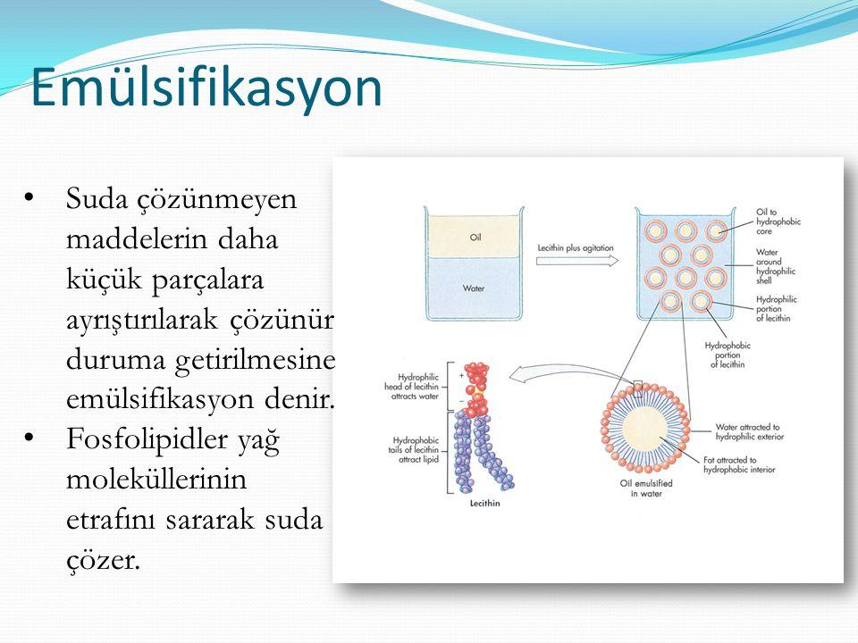 Fosfolipidlerin fonksiyonları Hücre membranını oluştururlar Eikozonoid sentezine katılırlar Emülsifiyer görevi yapabilirler Safra tuzları Lektinler