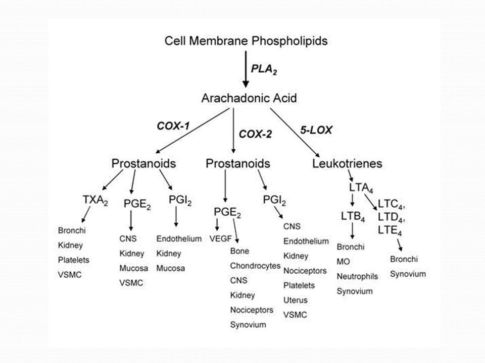 Eikozanoidler: 3 çeşittir Prostaglandinler: eikozanoidlerin alt sınıfından olup, enflamasyon ve anaflaktik şok reaksiyonlarına aracılık ederler.