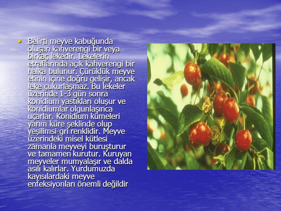 Belirti meyve kabuğunda oluşan kahverengi bir veya birkaç lekedir. Lekelerin etraflarında açık kahverengi bir halka bulunur. Çürüklük meyve etinin içi