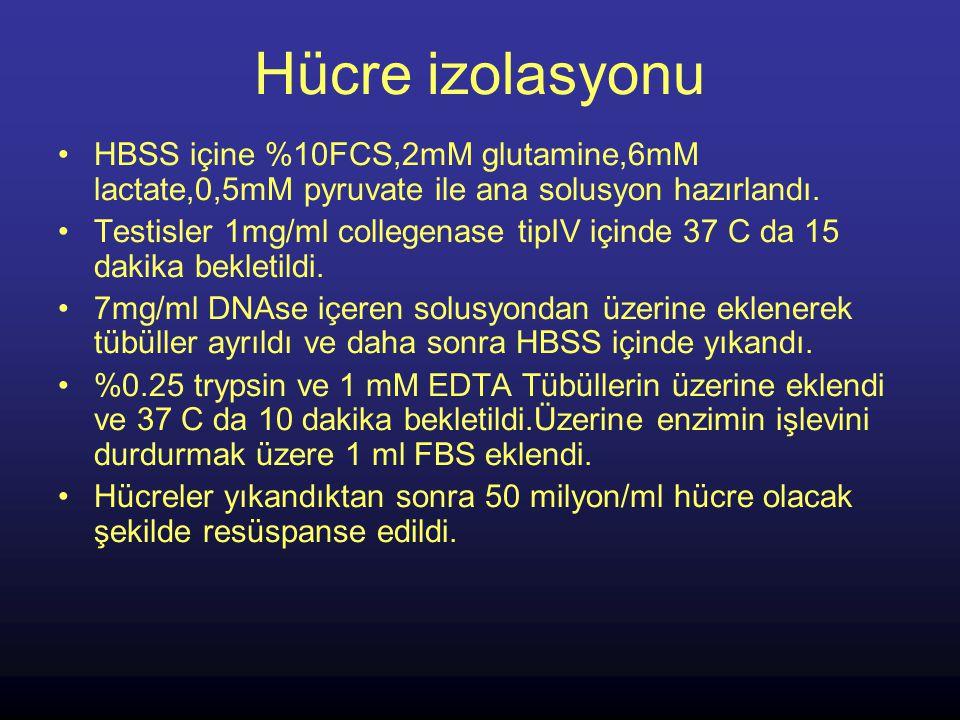 Hücre izolasyonu HBSS içine %10FCS,2mM glutamine,6mM lactate,0,5mM pyruvate ile ana solusyon hazırlandı. Testisler 1mg/ml collegenase tipIV içinde 37