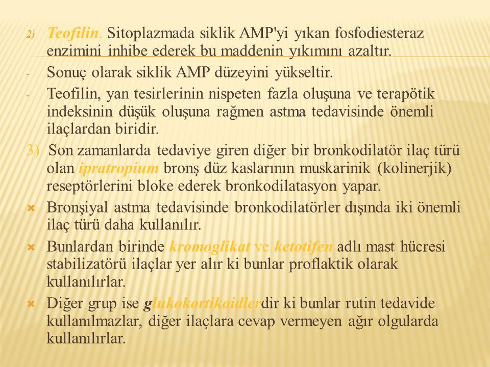 2) Teofilin. Sitoplazmada siklik AMP'yi yıkan fosfodiesteraz enzimini inhibe ederek bu maddenin yıkımını azaltır. - Sonuç olarak siklik AMP düzeyini y