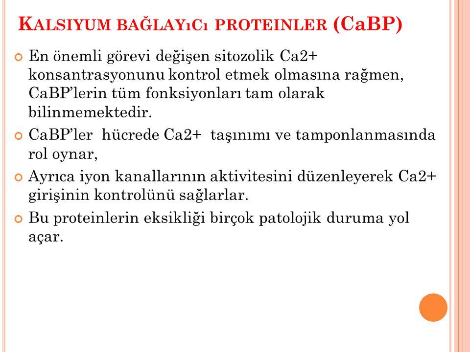 K ALSIYUM BAĞLAYıCı PROTEINLER (CaBP) En önemli görevi değişen sitozolik Ca2+ konsantrasyonunu kontrol etmek olmasına rağmen, CaBP'lerin tüm fonksiyon