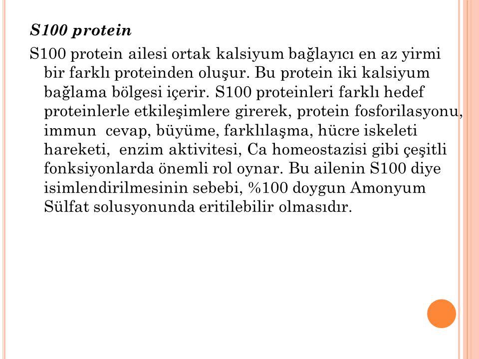 S100 protein S100 protein ailesi ortak kalsiyum bağlayıcı en az yirmi bir farklı proteinden oluşur. Bu protein iki kalsiyum bağlama bölgesi içerir. S1