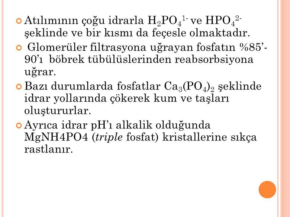 Atılımının çoğu idrarla H 2 PO 4 1- ve HPO 4 2- şeklinde ve bir kısmı da feçesle olmaktadır. Glomerüler filtrasyona uğrayan fosfatın %85'- 90'ı böbrek