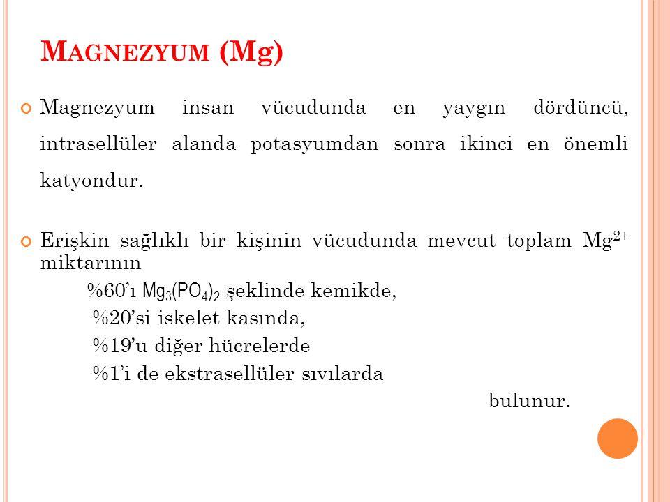 M AGNEZYUM (Mg) Magnezyum insan vücudunda en yaygın dördüncü, intrasellüler alanda potasyumdan sonra ikinci en önemli katyondur. Erişkin sağlıklı bir