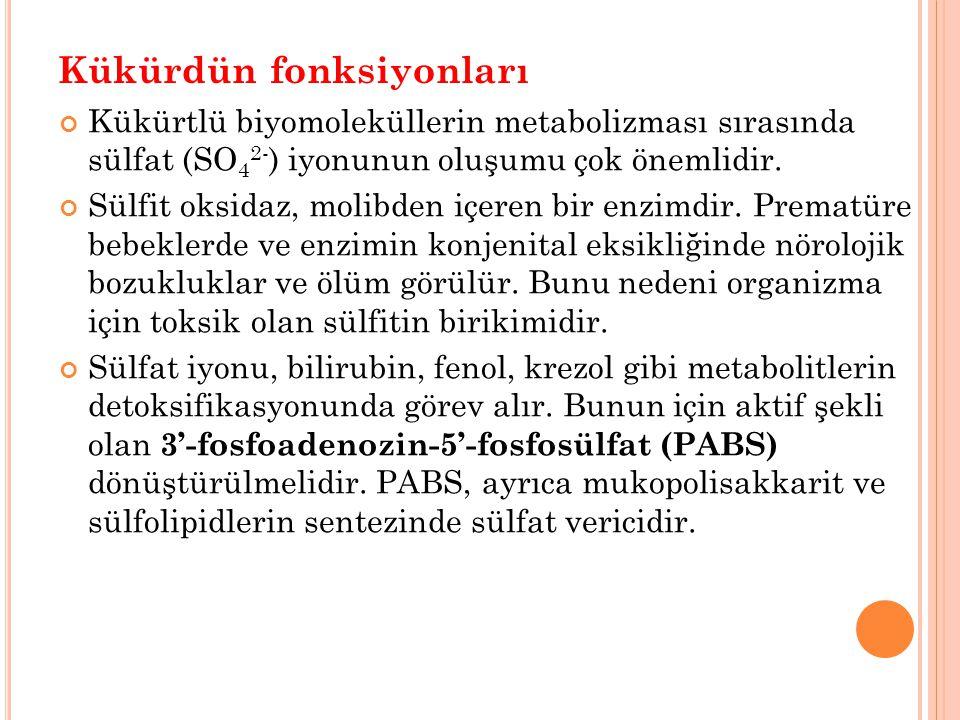 Kükürdün fonksiyonları Kükürtlü biyomoleküllerin metabolizması sırasında sülfat (SO 4 2- ) iyonunun oluşumu çok önemlidir. Sülfit oksidaz, molibden iç
