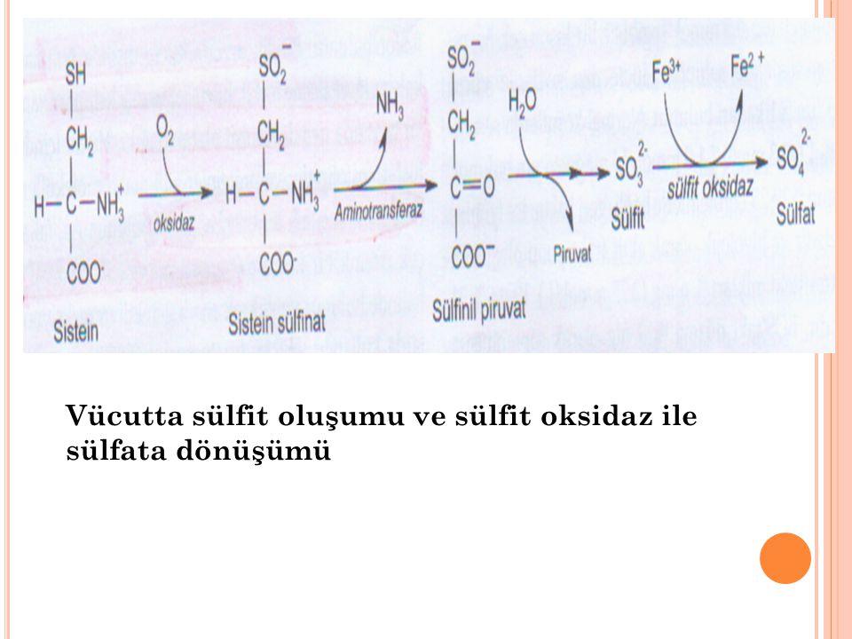 Vücutta sülfit oluşumu ve sülfit oksidaz ile sülfata dönüşümü