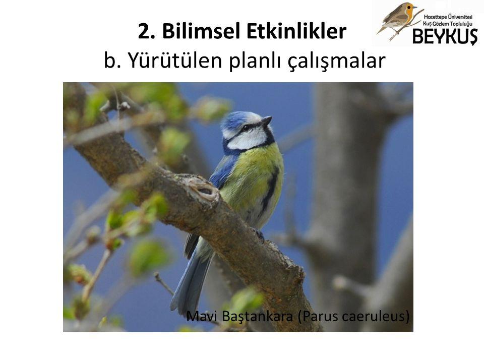 2. Bilimsel Etkinlikler b. Yürütülen planlı çalışmalar Mavi Baştankara (Parus caeruleus)