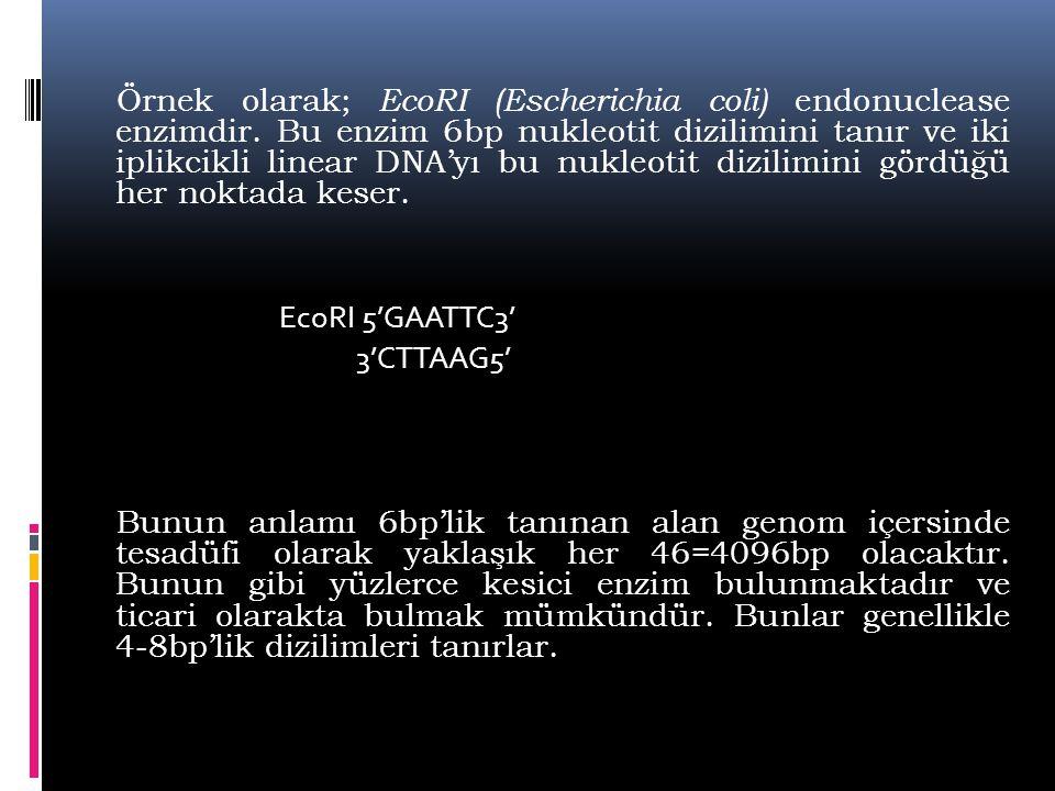 Örnek olarak; EcoRI (Escherichia coli) endonuclease enzimdir. Bu enzim 6bp nukleotit dizilimini tanır ve iki iplikcikli linear DNA'yı bu nukleotit diz