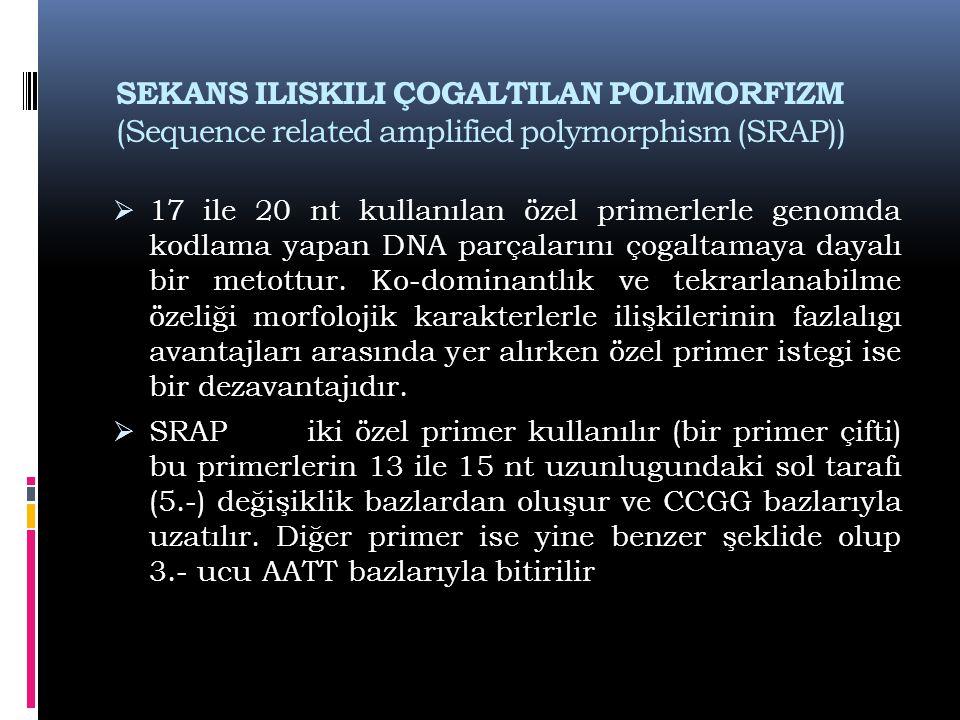 SEKANS ILISKILI ÇOGALTILAN POLIMORFIZM (Sequence related amplified polymorphism (SRAP))  17 ile 20 nt kullanılan özel primerlerle genomda kodlama yap