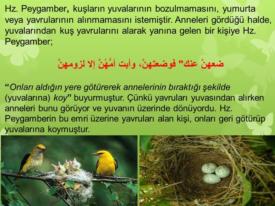 Hz. Peygamber, kuşların yuvalarının bozulmamasını, yumurta veya yavrularının alınmamasını istemiştir. Anneleri gördüğü halde, yuvalarından kuş yavrula