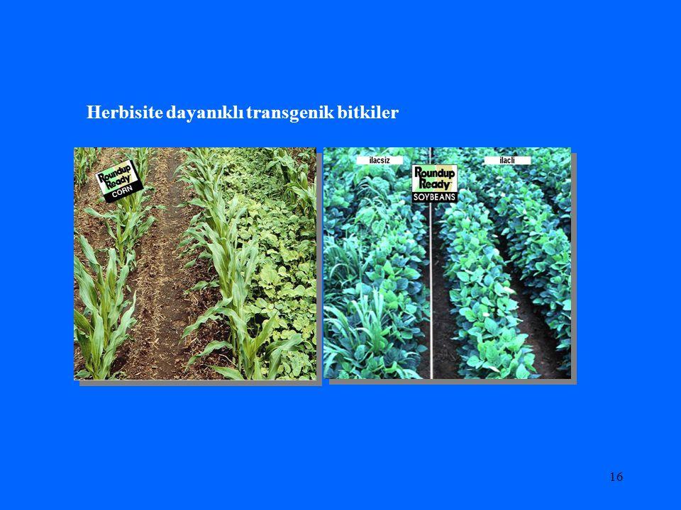 15 Tarımsal Üretimde kullanılan transgenik bitkiler; Bitki biyoteknolojisi sayesinde geliştirilen yeni bitki çeşitleri bu güne kadar en fazla kullanım