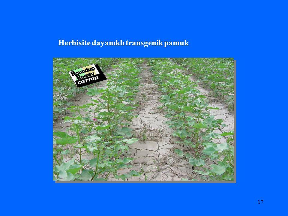 16 Herbisite dayanıklı transgenik bitkiler