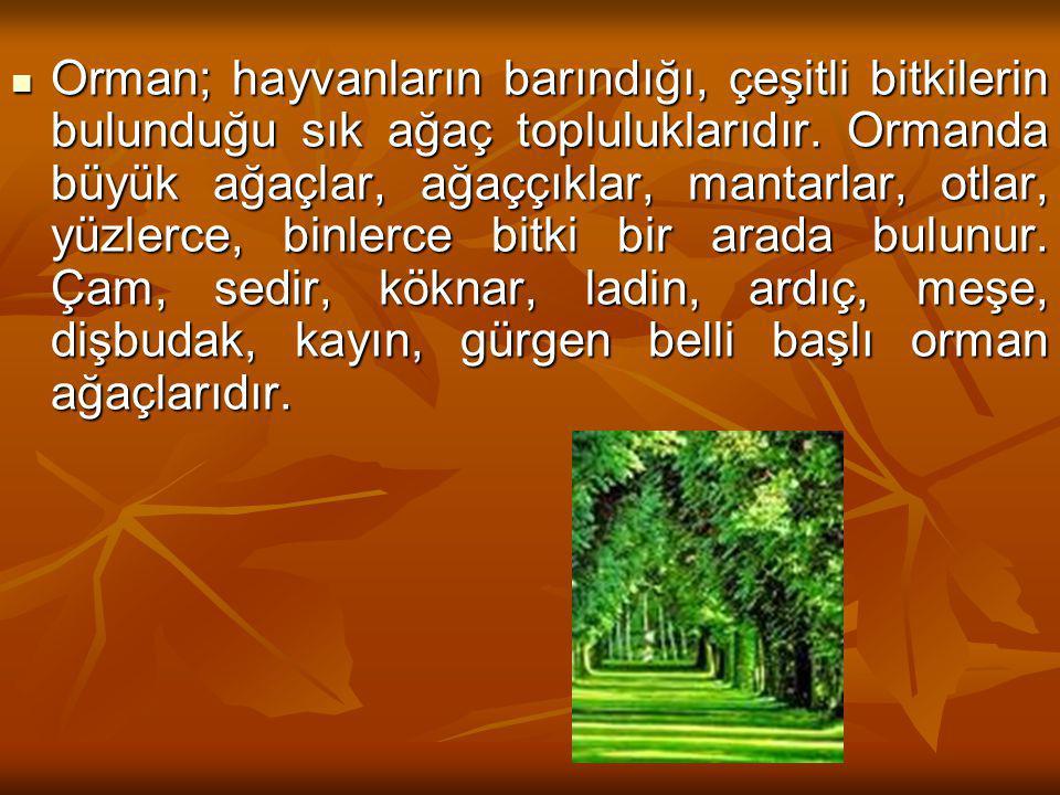 Orman; hayvanların barındığı, çeşitli bitkilerin bulunduğu sık ağaç topluluklarıdır. Ormanda büyük ağaçlar, ağaççıklar, mantarlar, otlar, yüzlerce, bi