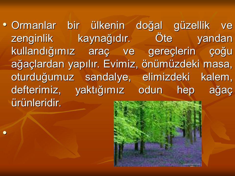 Ormanlar bir ülkenin doğal güzellik ve zenginlik kaynağıdır.