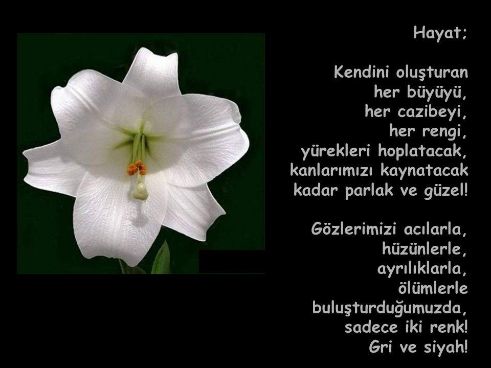 7 Hayat; Kendini oluşturan her büyüyü, her cazibeyi, her rengi, yürekleri hoplatacak, kanlarımızı kaynatacak kadar parlak ve güzel! Gözlerimizi acılar