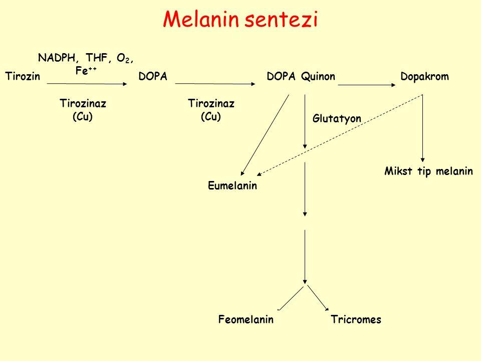 Melanin sentezi Glutatyon TirozinDOPA Tirozinaz (Cu) NADPH, THF, O 2, Fe ++ DOPA Quinon Tirozinaz (Cu) Eumelanin Dopakrom Mikst tip melanin Feomelanin