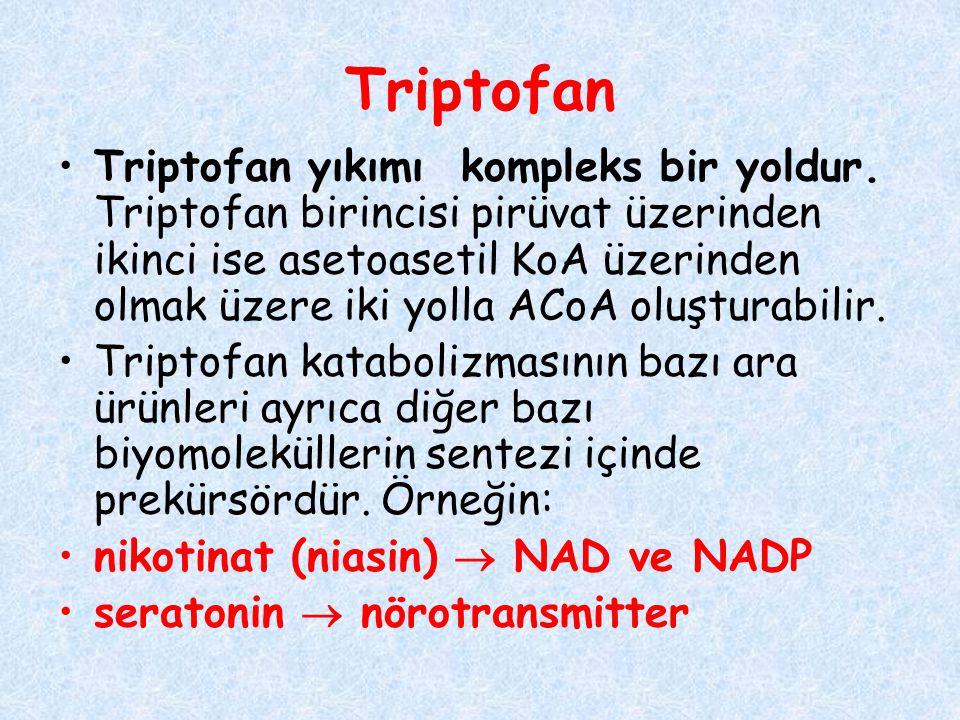 Triptofan Triptofan yıkımı kompleks bir yoldur. Triptofan birincisi pirüvat üzerinden ikinci ise asetoasetil KoA üzerinden olmak üzere iki yolla ACoA