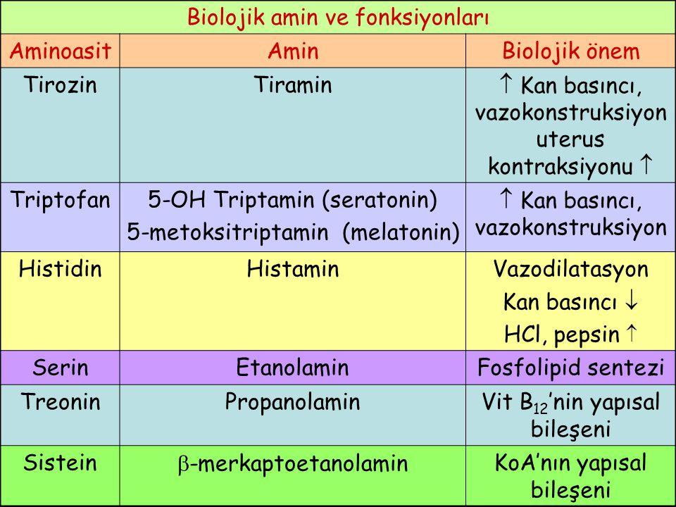 Biolojik amin ve fonksiyonları AminoasitAminBiolojik önem TirozinTiramin  Kan basıncı, vazokonstruksiyon uterus kontraksiyonu  Triptofan5-OH Triptam