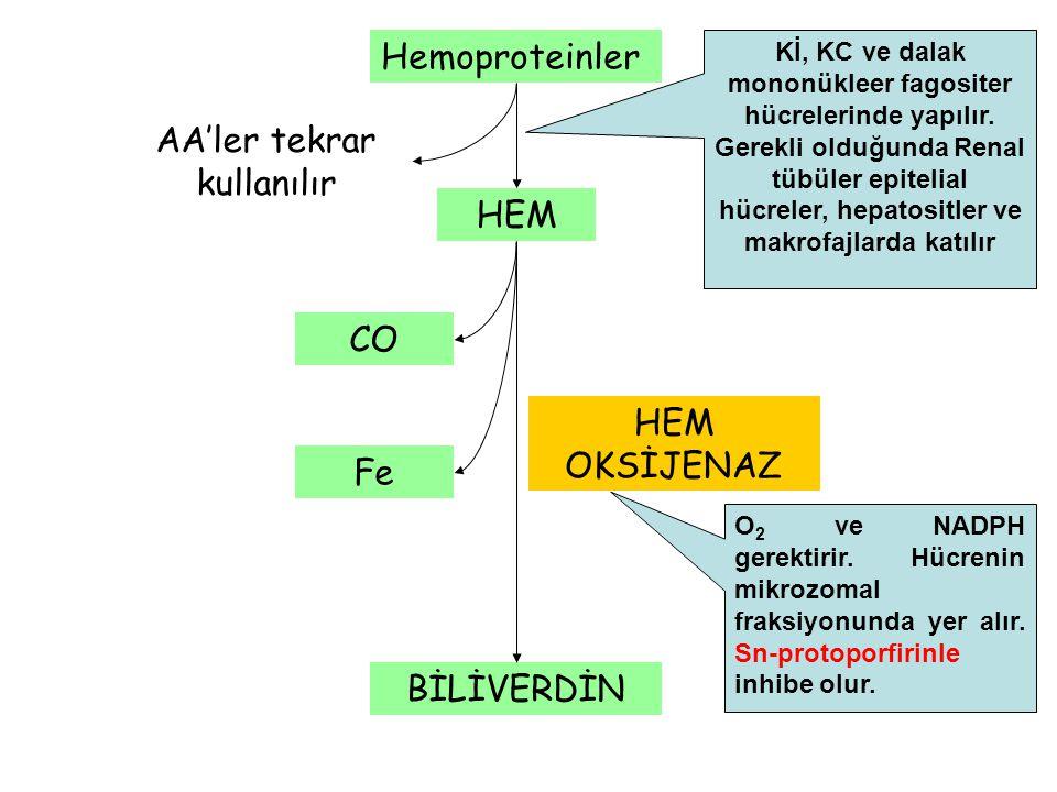 Hemoproteinler HEM AA'ler tekrar kullanılır BİLİVERDİN Fe CO HEM OKSİJENAZ Kİ, KC ve dalak mononükleer fagositer hücrelerinde yapılır. Gerekli olduğun