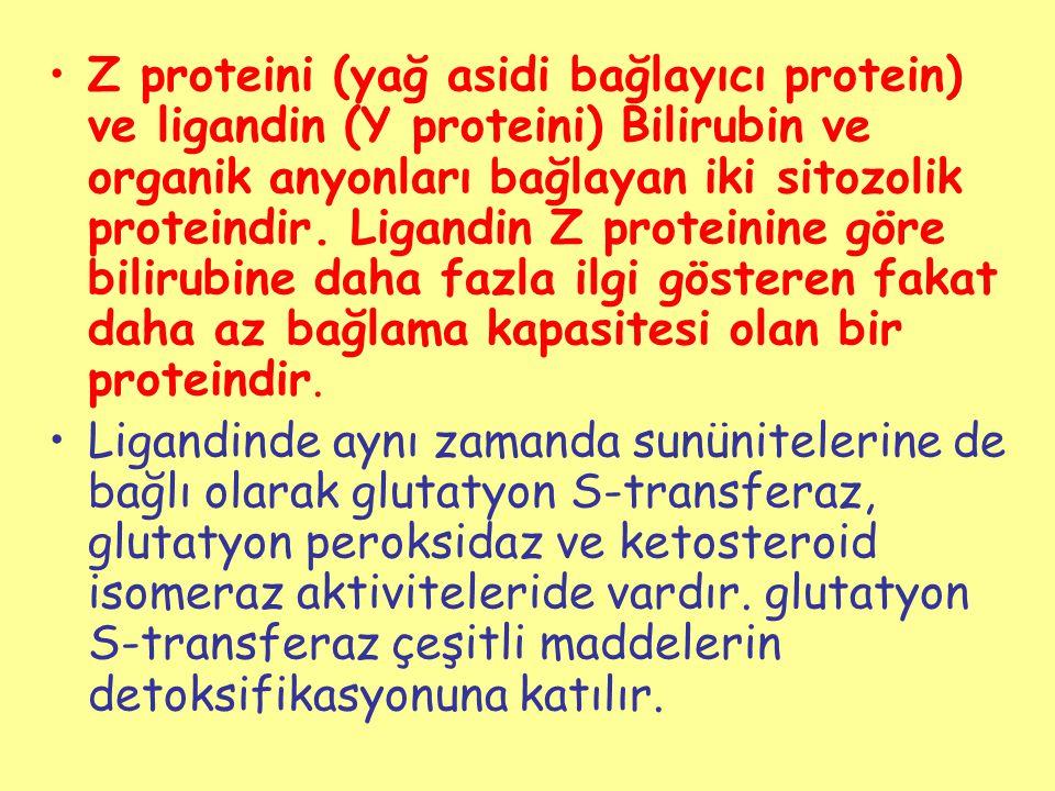 Z proteini (yağ asidi bağlayıcı protein) ve ligandin (Y proteini) Bilirubin ve organik anyonları bağlayan iki sitozolik proteindir. Ligandin Z protein