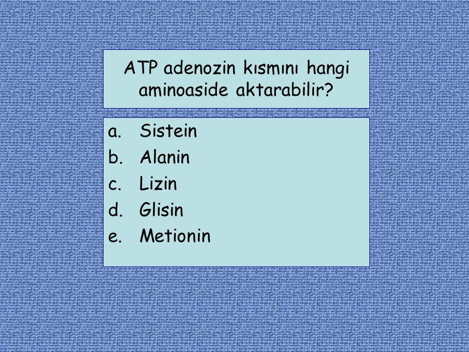 ATP adenozin kısmını hangi aminoaside aktarabilir? a.Sistein b.Alanin c.Lizin d.Glisin e.Metionin