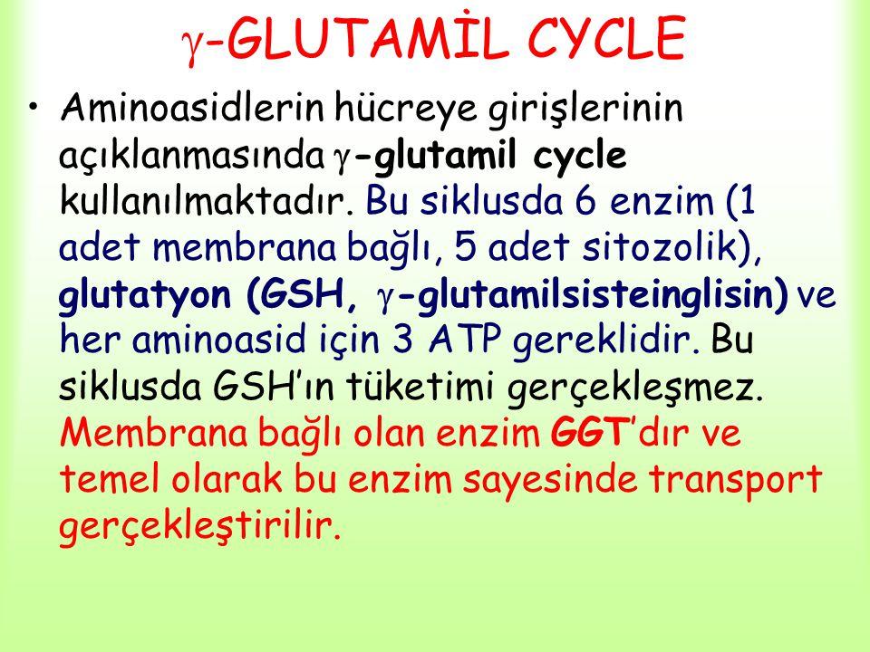  -GLUTAMİL CYCLE Aminoasidlerin hücreye girişlerinin açıklanmasında  -glutamil cycle kullanılmaktadır. Bu siklusda 6 enzim (1 adet membrana bağlı, 5