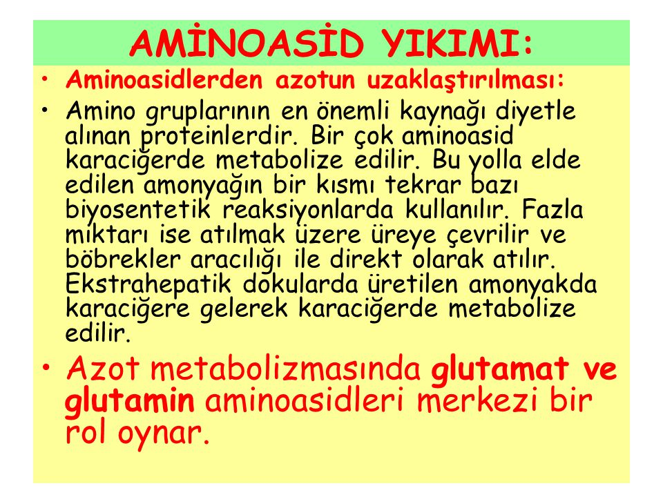 AMİNOASİD YIKIMI: Aminoasidlerden azotun uzaklaştırılması: Amino gruplarının en önemli kaynağı diyetle alınan proteinlerdir. Bir çok aminoasid karaciğ