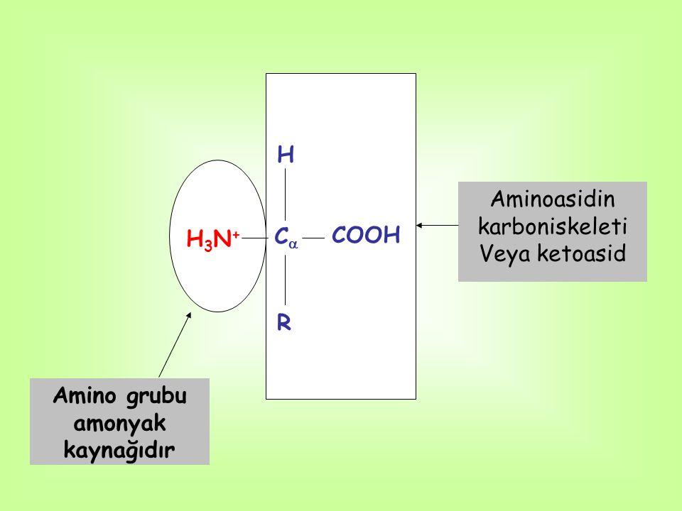 H H3N+H3N+ CC COOH R Amino grubu amonyak kaynağıdır Aminoasidin karboniskeleti Veya ketoasid