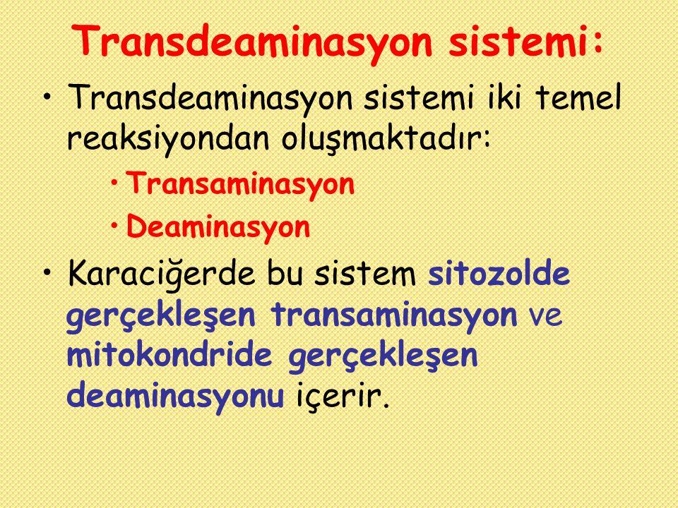 Transdeaminasyon sistemi: Transdeaminasyon sistemi iki temel reaksiyondan oluşmaktadır: Transaminasyon Deaminasyon Karaciğerde bu sistem sitozolde ger