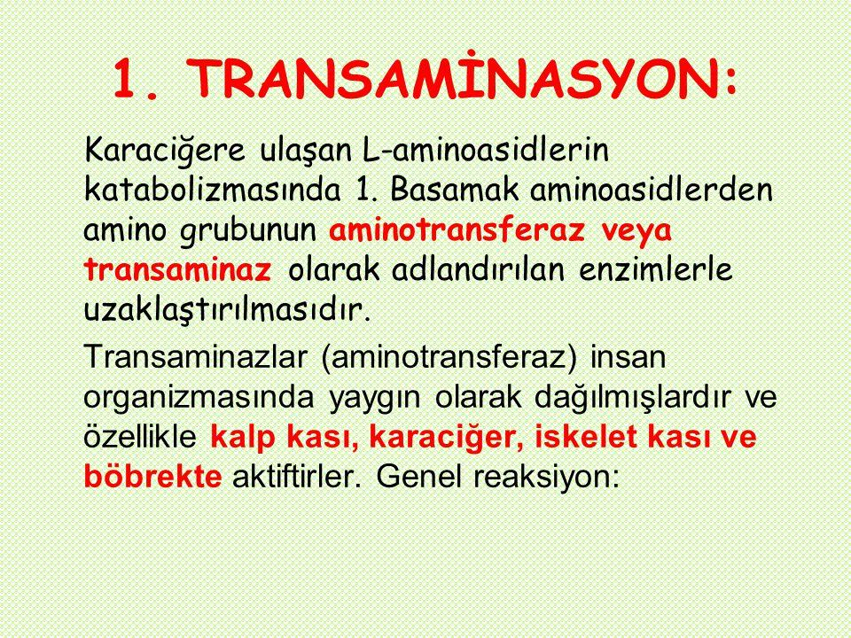 1. TRANSAMİNASYON: Karaciğere ulaşan L-aminoasidlerin katabolizmasında 1. Basamak aminoasidlerden amino grubunun aminotransferaz veya transaminaz olar