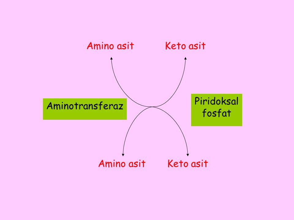 Amino asit Piridoksal fosfat Aminotransferaz Keto asit Amino asitKeto asit