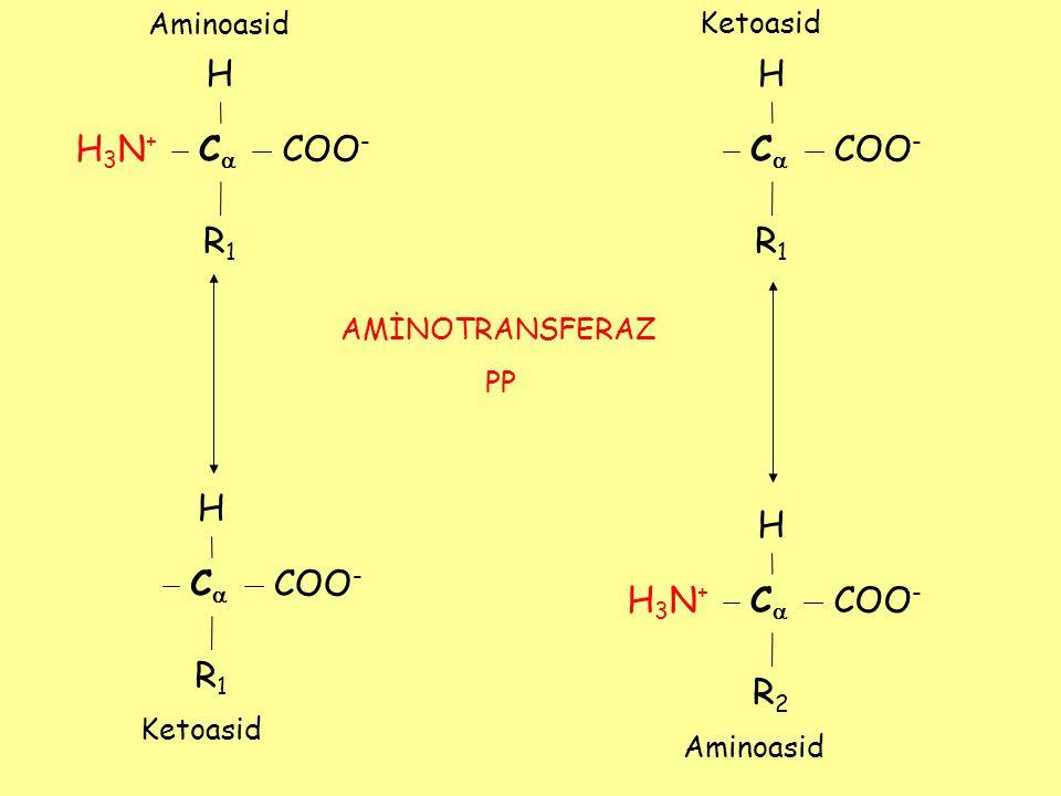 H H3N+H3N+ CC COO - R1R1 H CC R1R1 H H3N+H3N+ CC R2R2 H CC R1R1 AMİNOTRANSFERAZ PP Aminoasid Ketoasid Aminoasid Ketoasid